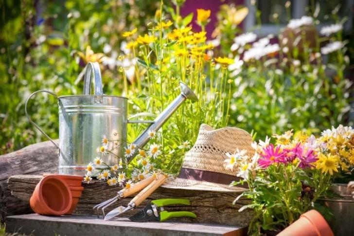園芸療法がパニック障害やうつ病...