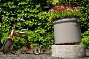 緑を見る 園芸療法