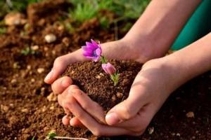 土に触れる 園芸療法