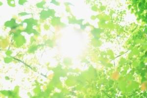 太陽の光を浴びる 園芸療法