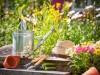 園芸療法がパニック障害やうつ病の改善に効果的